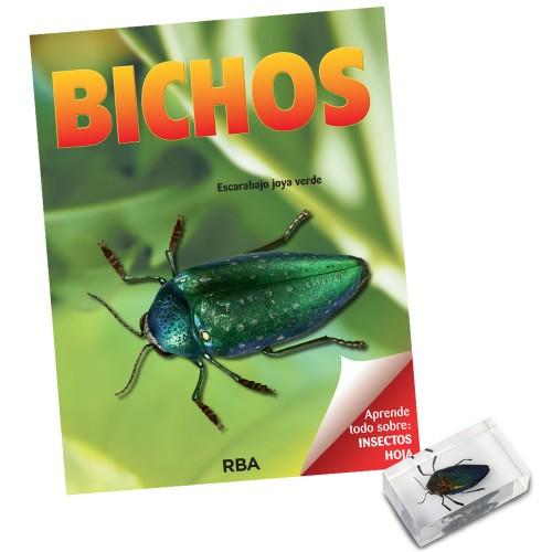 Escarabajo joya verde
