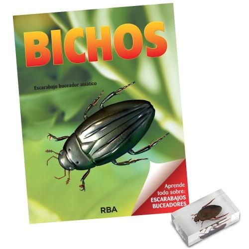 Escarabajo buceador